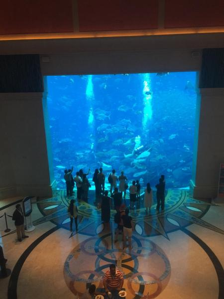 Atlantis the Palm aquarium