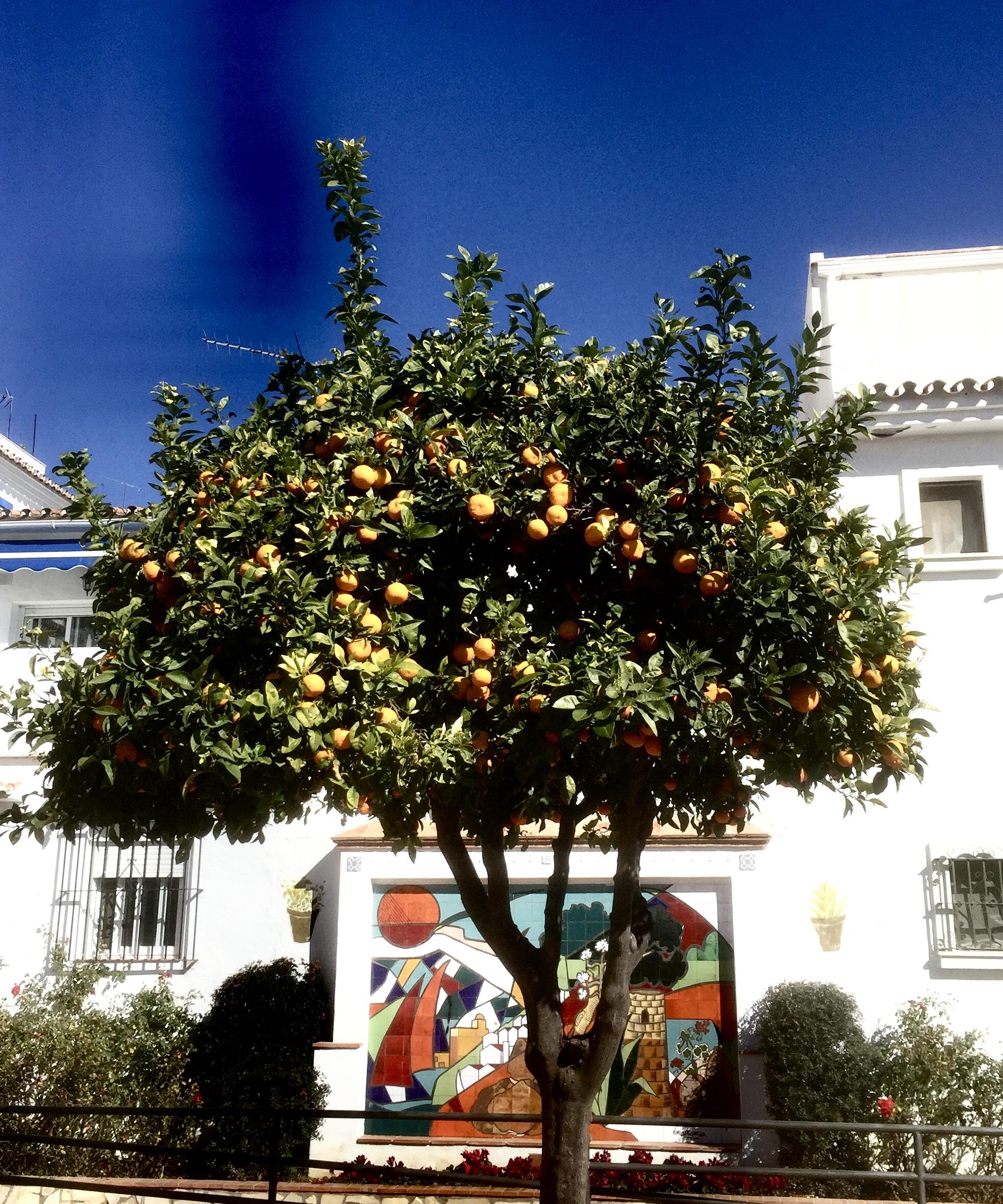 Un oranger sur le sol andalou, cela se voit partout...