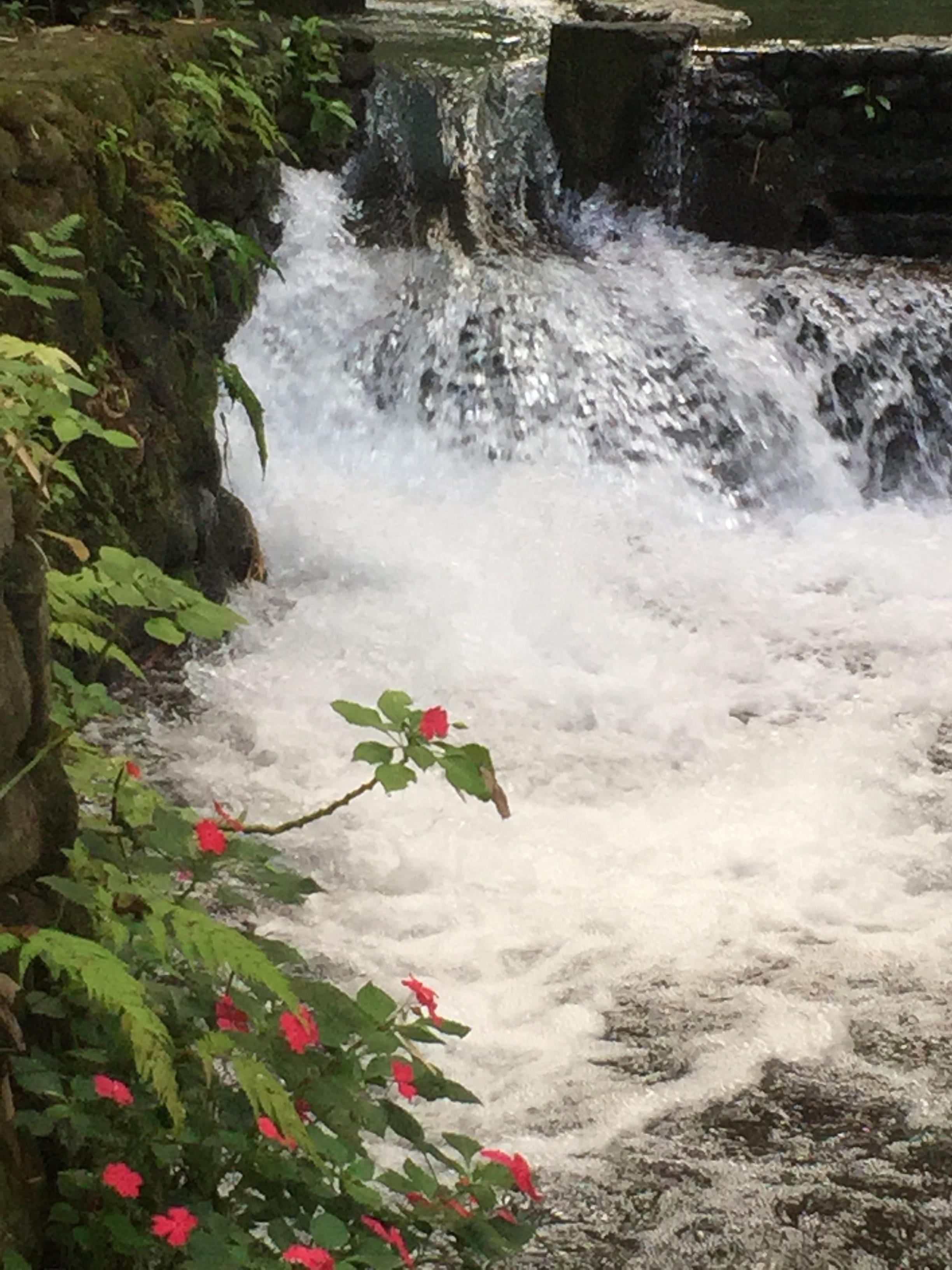 Bato Springs - Laguna