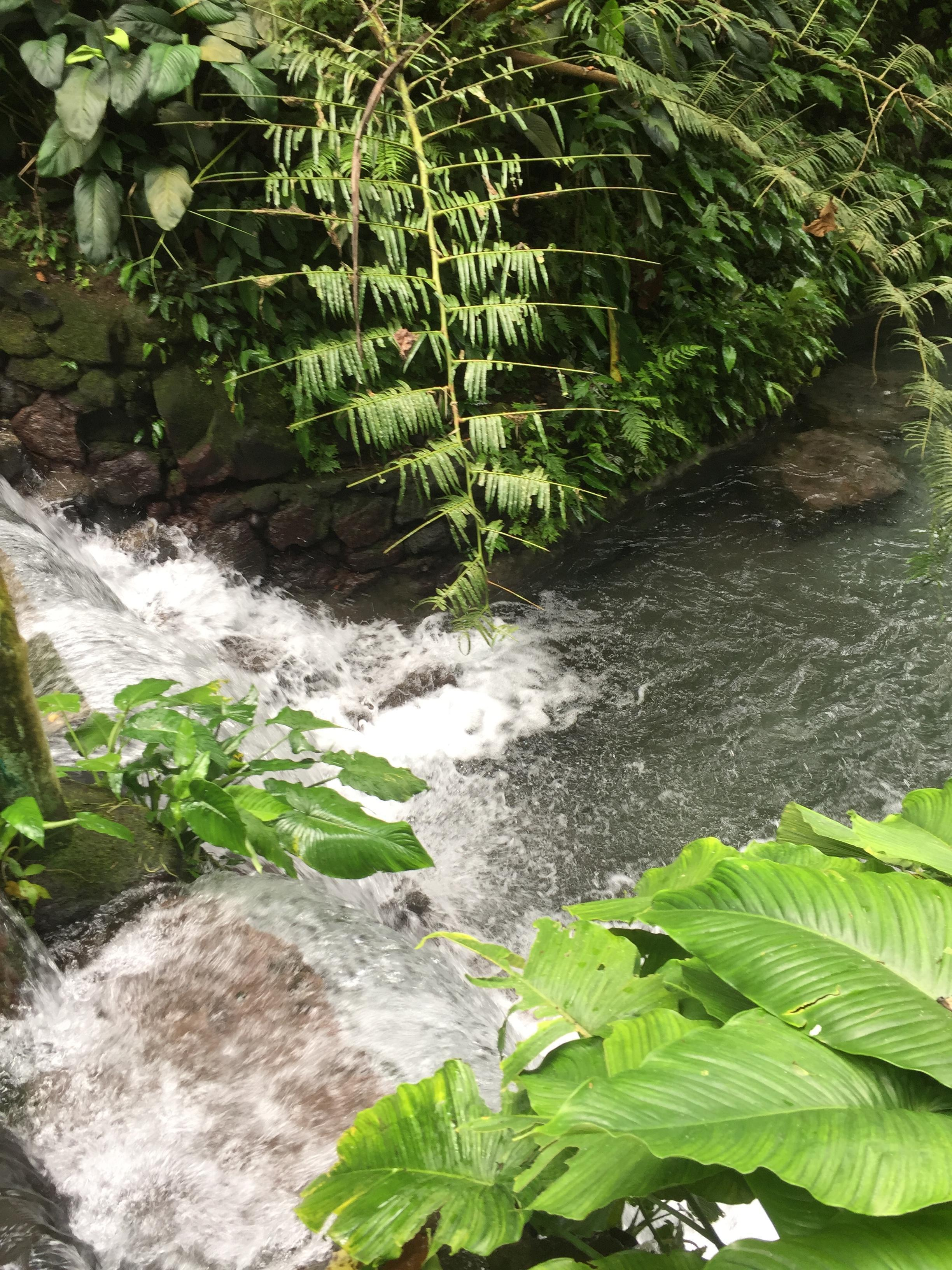 Bato Springs, la rivière