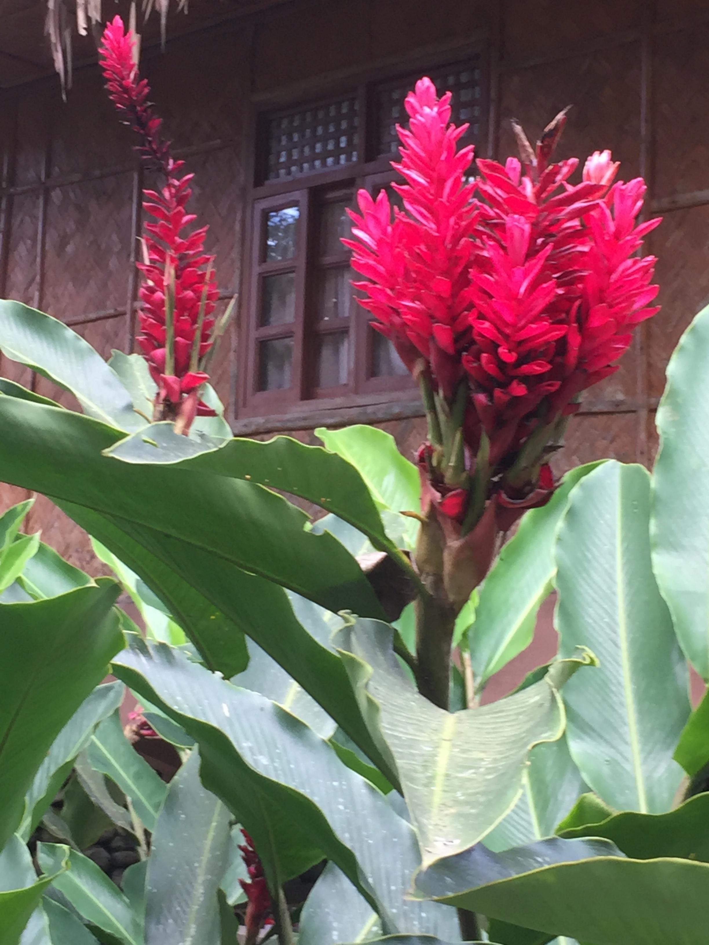 Bato Springs - Laguna, la flore locale