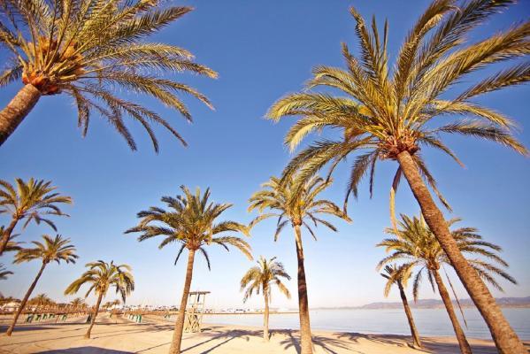 Palma bay 4