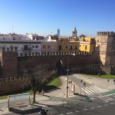 Seville 204